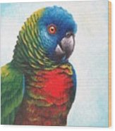 St. Lucia Parrot Wood Print