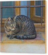 St Paul Cat Wood Print