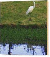 St Thomas Great Egret At The Lake Wood Print