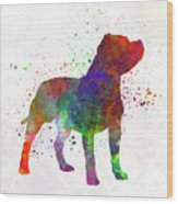 Staffordshire Bull Terrier In Watercolor Wood Print