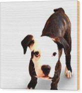 Staffordshire Bull Terrier Puppy Wood Print by Michael Tompsett