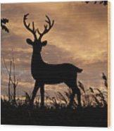 Stag 002 Wood Print