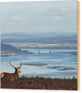 Stag Overlooking The Beauly Firth And Inverness Wood Print
