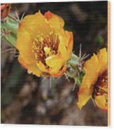 Staghorn Cactus Blossons Wood Print