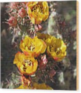 Staghorn Cholla Blossoms Wood Print
