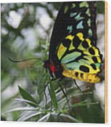 Stained Glass Butterfly Wood Print