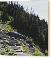 Stairs Along Skyline Trail Wood Print