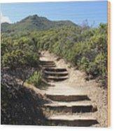 Stairway To Heaven On Mt Tamalpais Wood Print
