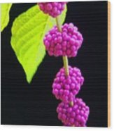 Stalk Of Seeds Wood Print