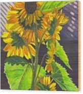 Stalk Of Sunflowers Wood Print