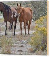 Stallion And Mare Wood Print