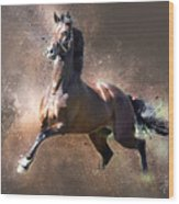 Stallion Wood Print