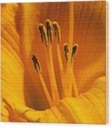 Stamens Wood Print