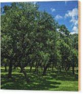 Stand Of Oaks Wood Print