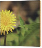 Stand Out - Dandelion Wood Print