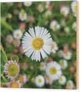 Stand Out From The Crowd Wood Print