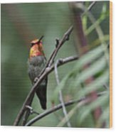 Standing Guard -- Anna's Hummingbird In Templeton, California Wood Print