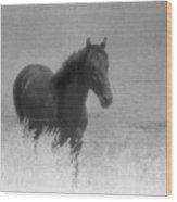 Standing Horse  Wood Print