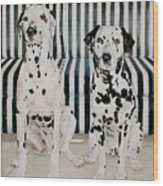 Stanley And Stelle Wood Print