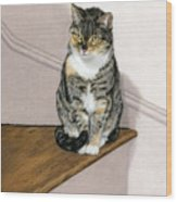 Stanzie Cat Wood Print