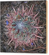 Star Cactus Pink-aqua-blue Wood Print