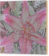 star Flower as Pencil Sketch Wood Print
