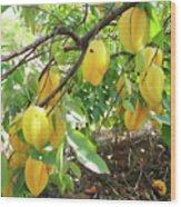 Star Fruit Belongs To The Plant Family Wood Print