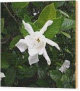Star Gardina Wood Print