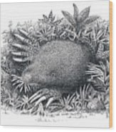 Star-nosed Mole Wood Print