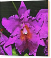 Star Of Bethlehem Orchid 006 Wood Print