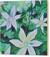 Star Of The Garden Wood Print