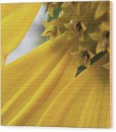 Star Tails Wood Print