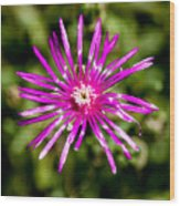 Starburst Of The Wildflowers Wood Print