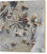 Starfish And Sea Shells Wood Print