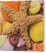 Starfish And Seashells  Wood Print