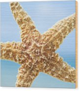 Starfish Close-up Wood Print