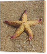 Starfish Wood Print by Mamie Thornbrue