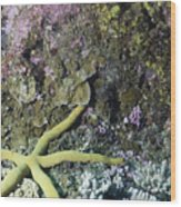 Starfish On A Coral Reef Wood Print