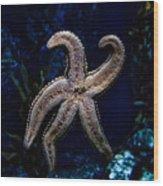 Starfish On Glass Wood Print