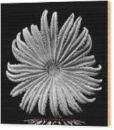 Starfish Transparency Wood Print