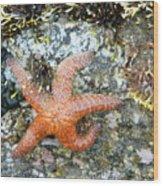 Starfish Running Wood Print