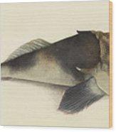 Stargazer. Kathetostoma Laeve  Wood Print