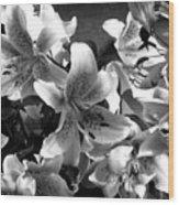 Stargazer Lilies Bw Wood Print