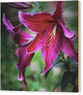 Asiatic Lily Wood Print
