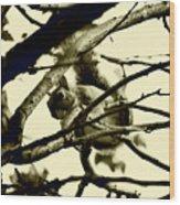 Staring Squirrel Wood Print