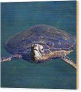 Staring Turtle Wood Print