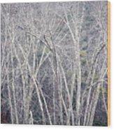 Stark Winter Wood Print