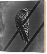 Darling Starling 2 Bnw Wood Print