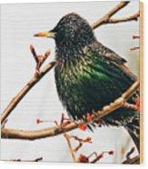 Starling Wood Print