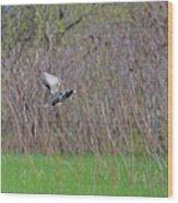 Starling Take-off Wood Print